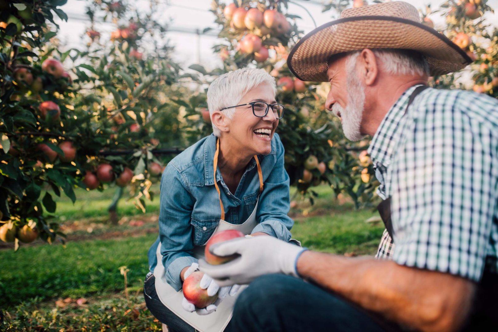 Femme et homme cueillant des pommes